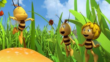 Die Biene Maja: Abenteuer Auf Der Klatschmohnwiese - Die Biene Maja: Der Kleine Ausreißer