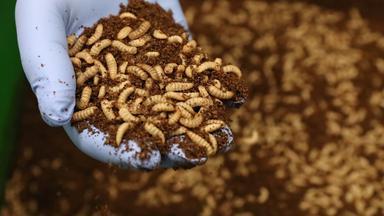 Planet E. - Klimaretter Insektenmehl
