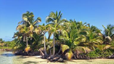 Terra X Dokumentationen Und Kurzclips - Abenteuer Karibik
