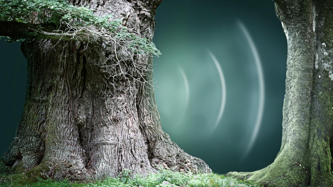 Kommunikation Bäume