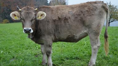 Terra Xpress - Bimmelnde Kühe Und Die Große Campinglust