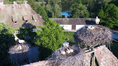 Storchennest im Tierpark Affenberg in Salem