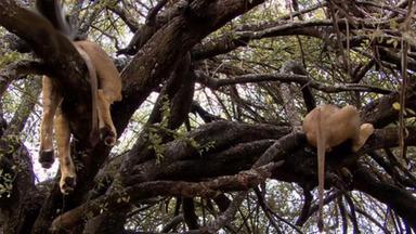 Zdfinfo - Die Geheime Welt Der Raubtiere - Jäger Und Gejagte