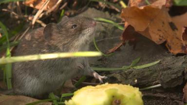 Planet E. - Planet E.: Mäuse-alarm - Nager Auf Dem Vormarsch