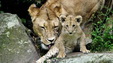 Pur+ - Das Entdeckermagazin Mit Eric Mayer - Pur+ Nachwuchs Im Zoo