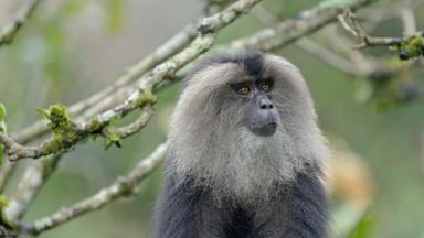 Zdfinfo - Naturparadies: Indien - Die Letzten Ihrer Art