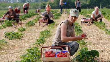Zdf.reportage - Zdf.reportage Ohne Geht's Nicht - Europäische Arbeitnehmer In Deutschland