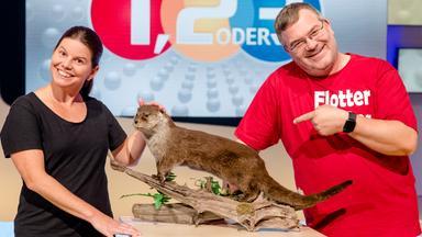 1, 2 Oder 3 - Otter - Cool Und Klug