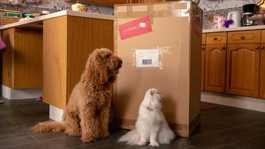 Wuffel, Der Wunderhund - Wuffel, Der Wunderhund: Ein Paket Für Frau Hobbs