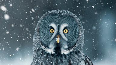 Terra X Dokumentationen Und Kurzclips - Wilde Winterwelten