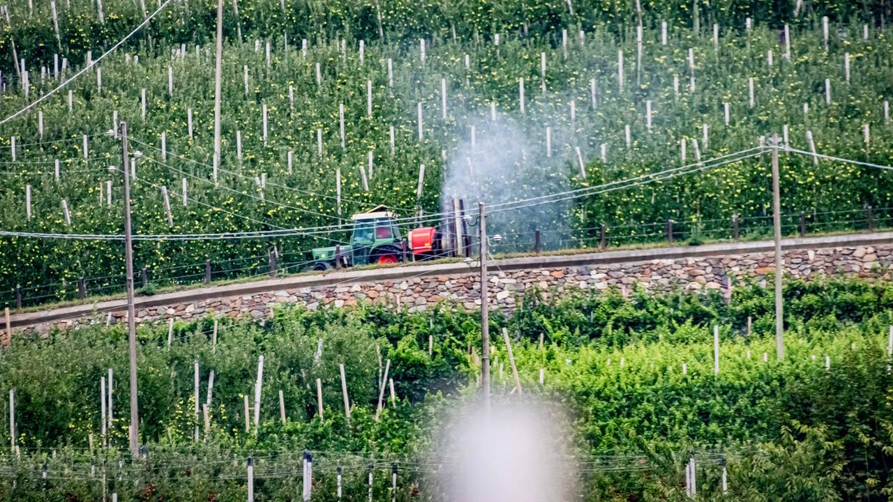 Gegen Gift: Apfelstreit in Südtirol