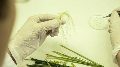 Planet E. - Planet E.: Schöne Neue Landwirtschaft?  Die Bayer-monsanto-fusion
