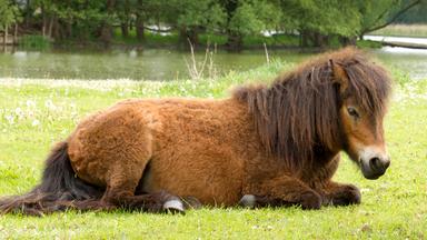 Löwenzähnchen - Löwenzähnchen: Pony