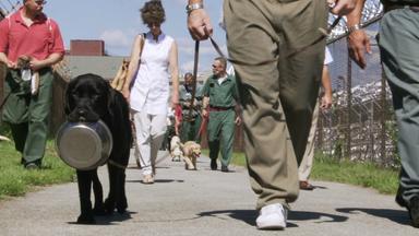 Zdfinfo - Prison Dogs - Hundeschule Im Knast