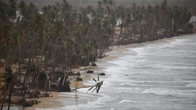 broken palm trees are seen after the area was hit by hurricane maria in yabucoa