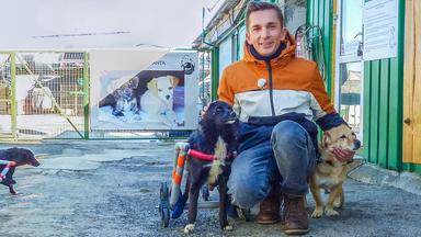 Pur+ - Das Entdeckermagazin Mit Eric Mayer - Pur+ Eric Rettet Die Straßenhunde
