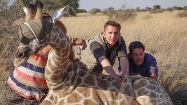 Pur+ - Das Entdeckermagazin Mit Eric Mayer - Pur+ Eric Rettet Die Giraffen