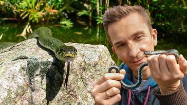 Pur+ - Das Entdeckermagazin Mit Eric Mayer - Pur+ Wie Giftig Sind Schlangen?