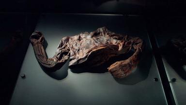 Zdfinfo - Rätselhafte Tote: Die Mysteriöse Moorleiche