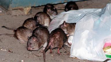 Zdfinfo - Wespen, Ratten, Schaben - Kammerjäger Im Dauereinsatz