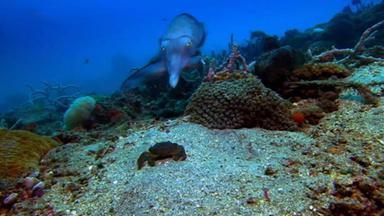 Zdfinfo - Die Geheime Welt Der Raubtiere - Unter Wasser