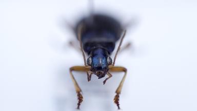 Zdfinfo - Wunder Der Wissenschaft: Riesenwelle Und Optische Täuschung