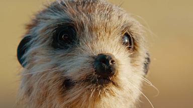 Terra X Dokumentationen Und Kurzclips - Spione Im Tierreich - überlebenskünstler