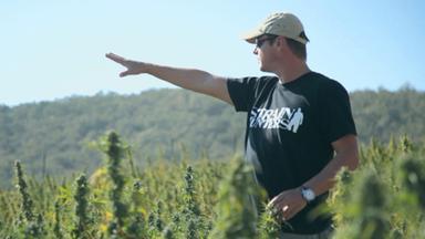Zdfinfo - Kriminelle Karrieren: Arjan Roskam -der König Des Cannabishandels