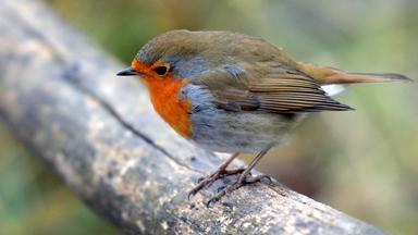Sonntags - Tv Fürs Leben - Alle Vögel Sind Schon Da