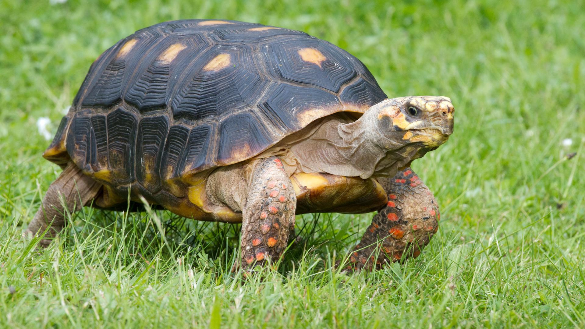 Tolle Süße Malvorlagen Von Schildkröten Ideen - Malvorlagen Von ...