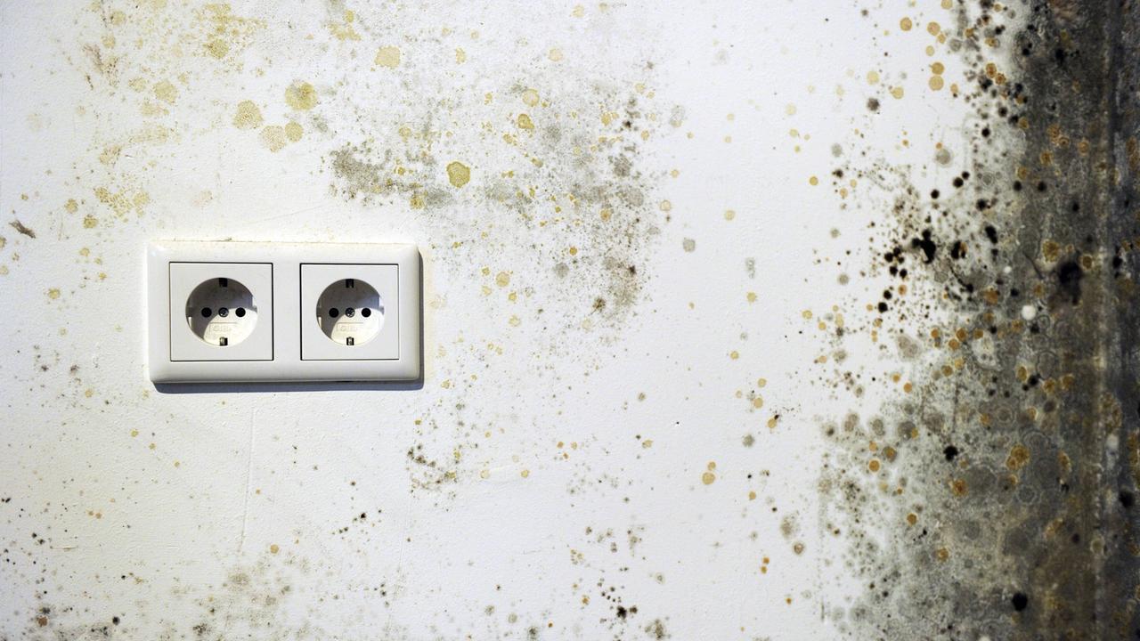 schimmel in der wohnung welche rechte haben mieter. Black Bedroom Furniture Sets. Home Design Ideas