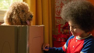 Wuffel, Der Wunderhund - Wuffel, Der Wunderhund: Ein Schloss Für Prinzessin Penny
