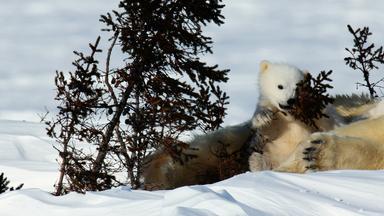 Zdfinfo - Schutzprojekt Erde: Kanada