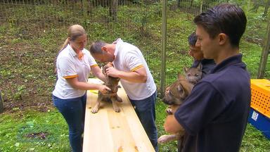 Tierartzt und Pfleger mit drei der Sechslinge