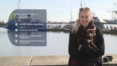 Zdfinfo - Geheimnisse Der Seefahrt: Das Doku-quiz