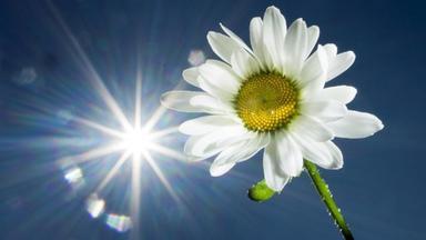 Sonntags - Tv Fürs Leben - Sonne, Liebe Sonne
