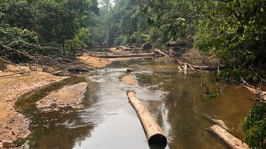 Zdfinfo - Sos Amazonas - Apokalypse Im Regenwald