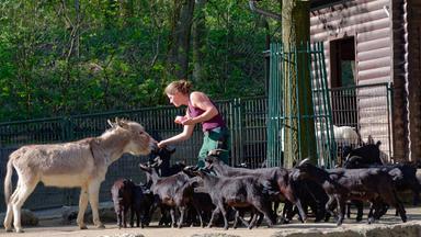 Sonntags - Tv Fürs Leben - Leben Mit Tieren