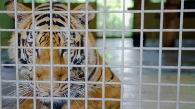 Zdfinfo - Tatort Dark Web: Illegaler Tierhandel