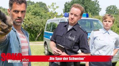Soko Wismar, Soko, Serie, Krimi - Sokoplus Wismar: Die Spur Der Schweine