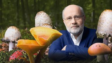 Harald Lesch - Schleichender Wandel: Killerpilze Auf Dem Vormarsch