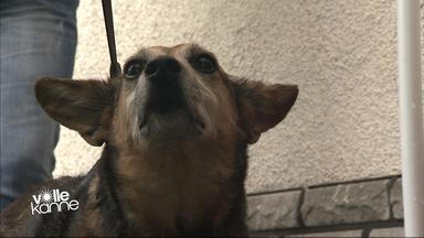 Hund bei Tiertafel