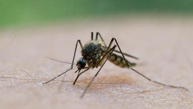 Pur+ - Das Entdeckermagazin Mit Eric Mayer - Tödliche Mücken