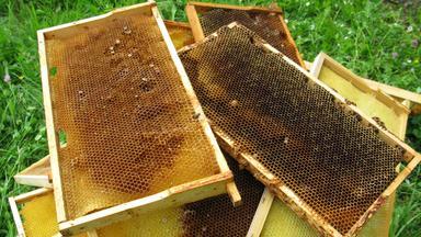 Terra Xpress - Risse Im Haus Und Entdeckung Im Bienenstock