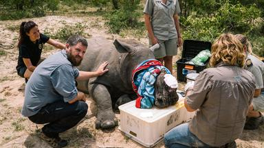 Zdfinfo - Unter Gangstern: Die Letzten Nashörner Afrikas