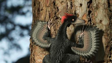 Zdfinfo - Verborgene Welten: Das Geheimnis Der Gefiederten Drachen