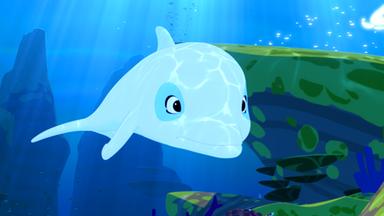 Zoom - Der Weiße Delfin - Zoom - Der Weiße Delfin: Die Verschwundene Schildkröte