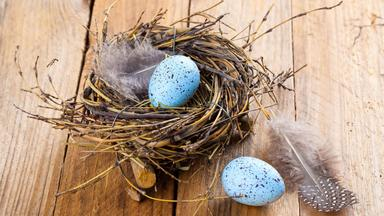 Sonntags - Tv Fürs Leben - Zeit Für Nestbau