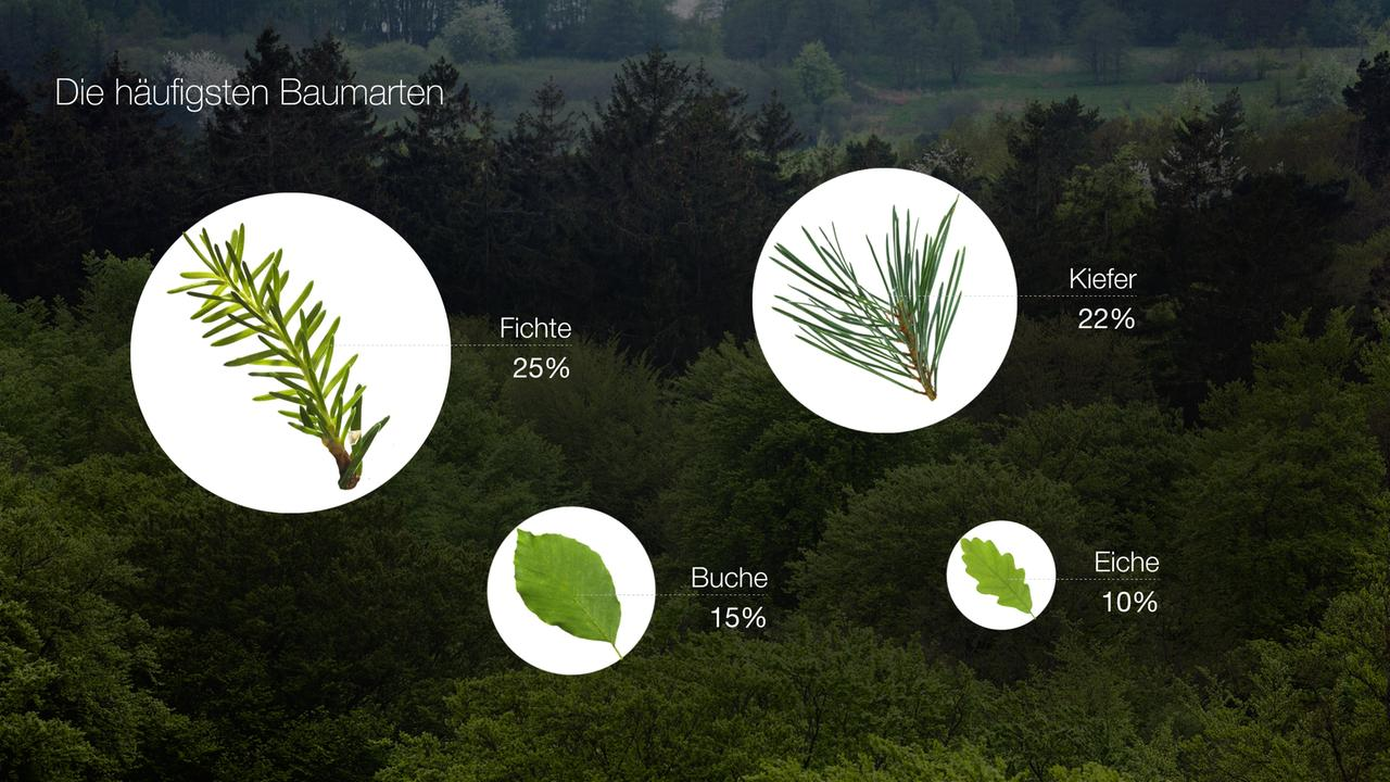 Terra X Wald