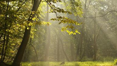 Planet E. - Waldmedizin - Die Kraft Der Bäume